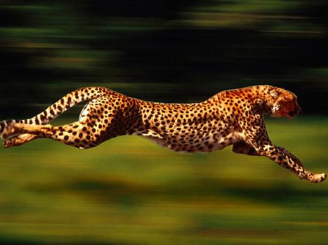 10 tips om sneller te kunnen hardlopen - PreSolution | Voeding Bewegen Gezondheid en Leefstijl | Scoop.it