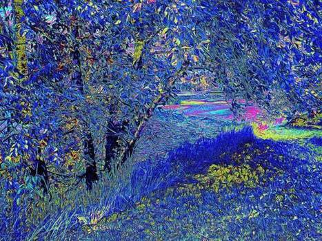 """""""Through the Trees"""" - artistry of Colin Hall 