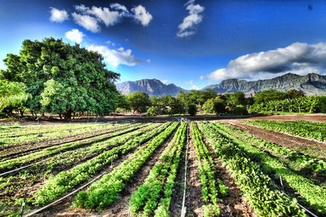 UN Report Says Small-Scale Organic Farming Only Way to Feed the World | Over Grow The System | Sustainability Science | Scoop.it