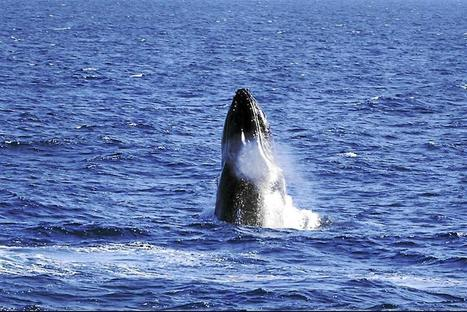 There be whales here! - The Star Online | Copy9 has new version for Android | Scoop.it