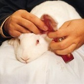 FAQs About Animal Testing | research project | Scoop.it