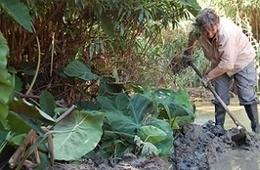 Una nueva herramienta permite analizar los riesgos de invasión de especies exóticas vegetales | Iniciativas sostenibles | Scoop.it