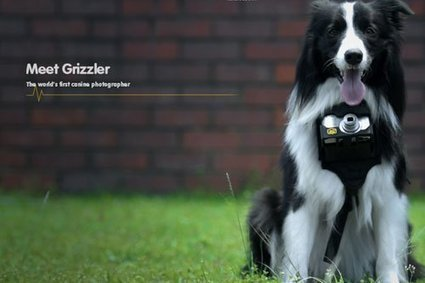 Nikon Dog's Camera - Creative Gazette | Luxury News | Scoop.it