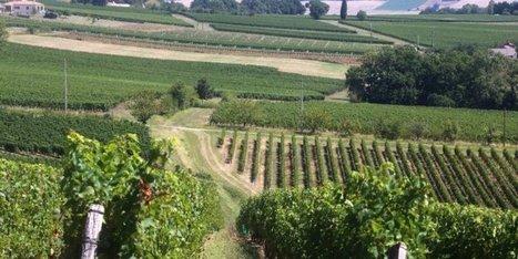 Réchauffement climatique : quel avenir pour les vignes ? | Chimie verte et agroécologie | Scoop.it
