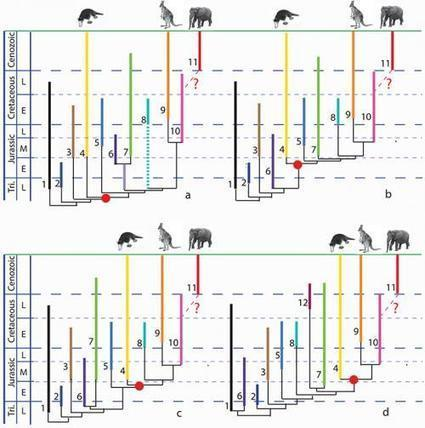 Mesozoic mammals—what do we know from China? | Science, Technology, and Current Futurism | Scoop.it