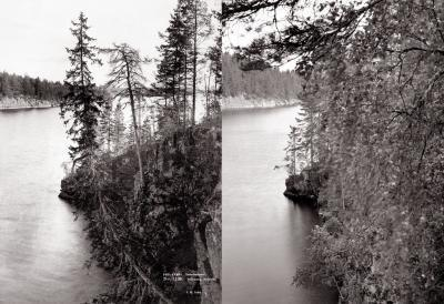 Nano Patents and Innovations: Denser Forests Capturing More Carbon | Finland | Scoop.it
