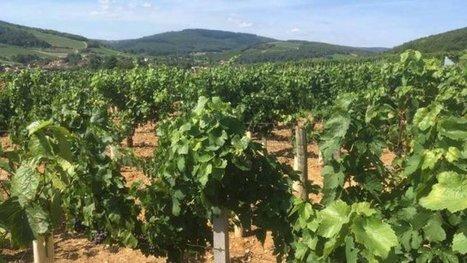 Viticulture : le rapprochement Beaujolais / Bourgogne se poursuit dans le monde du négoce - France 3 Bourgogne | Agriculture en Dordogne | Scoop.it