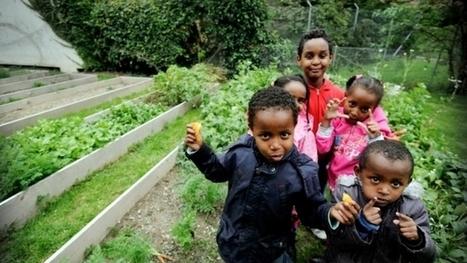 Rue du Contrat-Social, des requérants d'asile cultivent leur jardin potager   Genève multiculturelle   Scoop.it