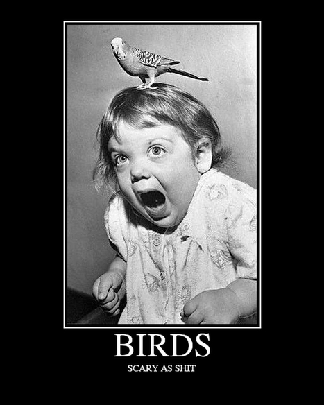 Birds | LOLfreak | Scoop.it