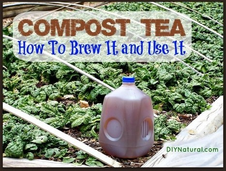 Compost Tea - What It Is, How to Make It, and the Benefits | Gardens and Gardening | Scoop.it