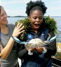 Chesapeake Bay has its own king crab: Giant blue is caught in Harford County   STEM Connections   Scoop.it