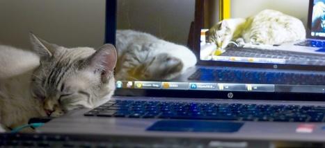 Faites la sieste au travail, c'est bon pour tout le monde | Management et responsabilité | Scoop.it
