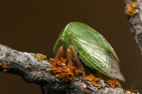 [Liens] MYRMECOS   EntomoScience   Scoop.it