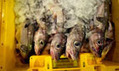 Prince Charles presents proof of profit in sustainable fisheries | ECONOMIES LOCALES VIVANTES | Scoop.it
