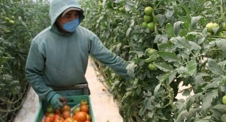 Con sol y heces, agricultores de México reducen las emisiones de ... - El País.com (España) | Energía renovable | Scoop.it