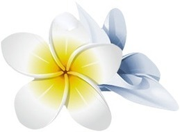 Accountant Honolulu, Hawaii | Bookkeeping Honolulu, Hawaii | CPA Honolulu, Hawaii | Rosa Alvarez | Scoop.it