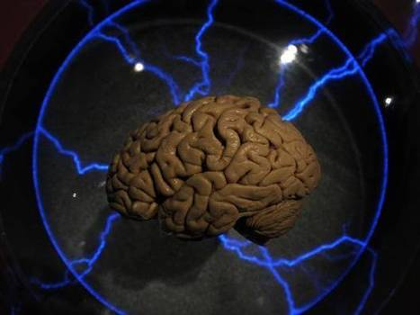 Scientists have grown an almost fully functioning brain in a lab | Social Neuroscience Advances | Scoop.it