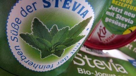Stevia: Klägliche Reste einer vermeintlichen Wunderpflanze | Healthcare | Scoop.it