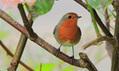 Winter urban birdlife - your Green shoots photographs | Agua | Scoop.it