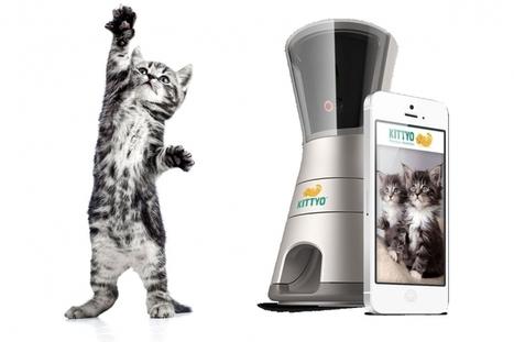 Kittyo, une innovation pour communiquer à distance avec ton chat | Les dernières innovations digitales | Scoop.it