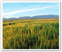 Economie: La Tunisie achète près de 40% de ses céréales à la France - Webmanagercenter | projet DA | Scoop.it
