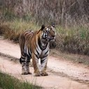Places to Visit in Tadoba | Tadoba Tiger King Resort | Scoop.it