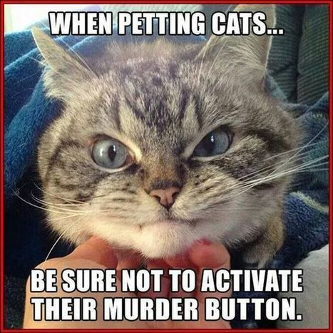 Be Careful Petting Cats | Funny Stuff | Scoop.it