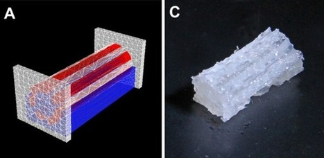 """""""tissue factory"""" experiments further with 3D bioprinting   3D_Materials journal   Scoop.it"""