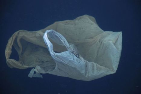 Why We Should Care About Marine Life Eating Plastic - The Daily Catch | Environmental issues | Scoop.it