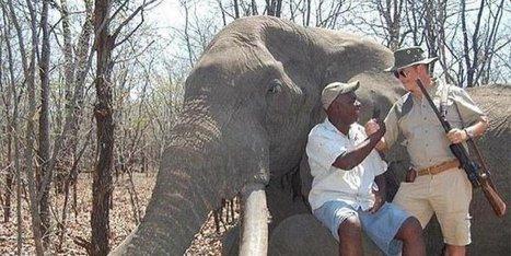 Un chasseur allemand abat l'un des plus grands éléphants d'Afrique   Nature Animals humankind   Scoop.it