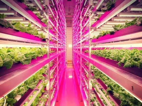 World's Largest Indoor Farm is 100 Times More Productive | Riffing on a Sustainable Society | Scoop.it