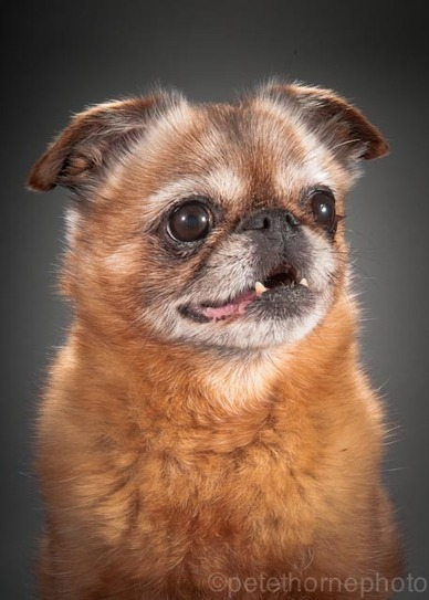 Old Faithful: Studio Portraits of Really Old Dogs | xposing world of Photography & Design | Scoop.it