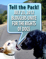 july-dr04.jpg (175x225 pixels) | Bloggers Unite Against Cruelty of Dogs | Scoop.it