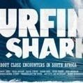 La coabitation entre surfeurs et requins ... | écolo | Scoop.it