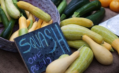 10 Summer Squash Varieties: Some You Know, Some You Don't - Modern Farmer | Sustainability: Permaculture, Organic Gardening & Farming, Homesteading, Tools & Implements | Scoop.it