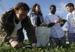 Treasure Island farm for culinary students - San Francisco Chronicle | Vertical Farm - Food Factory | Scoop.it