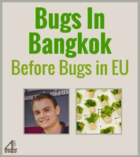 Bugs in Bangkok before Bugs in Europe! - 4ento   Insect protein   Scoop.it