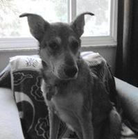 Bunny's Blog: Zora the Destroyer | Pet News | Scoop.it