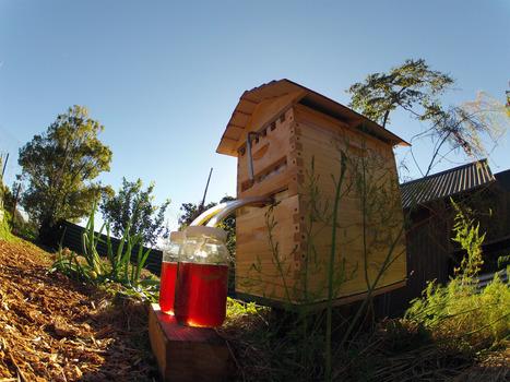 2 500 000 dollars pour du miel de ruche « au robinet » | Abeilles, intoxications et informations | Scoop.it