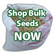 Bulk Heirloom Seeds for Sale - Sustainable Seed Company | Permaculture, Horticulture, Homesteading, Bio-Remediation, & Green Tech | Scoop.it