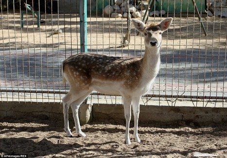 Dozens of animals starve at animal 'attraction' in Gaza | Biodiversity | Scoop.it