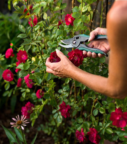 Gardening with Epsom Salt   SaltWorks   Herbs, Essential Oils and Homemade Remedies   Scoop.it