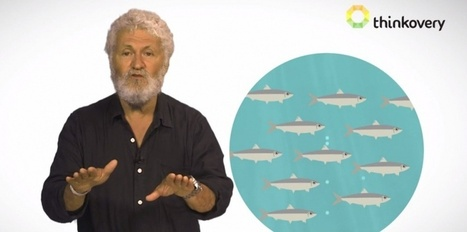 VIDEO. Le sens de la vie révélé par les sardines | DEPnews développement personnel | Scoop.it