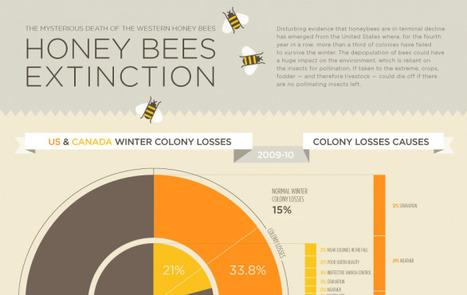 L'extinction des abeilles en infographie ★ Visual.ly | infographies | Scoop.it