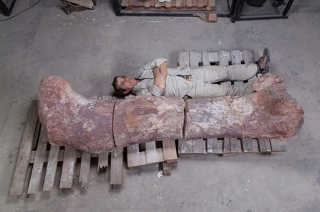 """""""World's Biggest Dinosaur"""" Discovered 