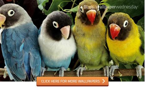 Beautiful Birds Wallpapers [Wallpaper Wednesday]   SpisanieTO   Scoop.it