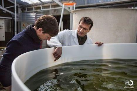"""""""Bio-bitumes : des routes vertes à base de micro-algues ?"""" - CNRS - Objectif TERRE - Solar Electron Economy   Algues biomatériaux   Scoop.it"""