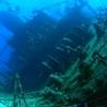 Ab's Scuba diving news