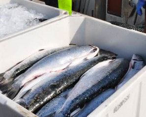 FRANCE: Seafood importer admits to selling potentially toxic fish | seafood marketing | Scoop.it