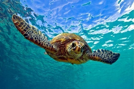 Akumal Swimming With Turtles For Free? Akumal Real Estate | Real estate | Scoop.it